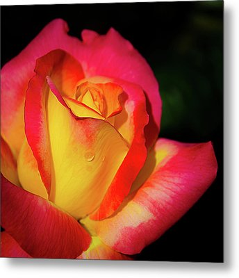 Metal Print featuring the photograph Love And Peace Rose by Julie Palencia