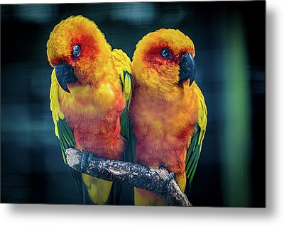 Metal Print featuring the photograph Love Birds by Chris Lord