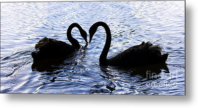Love Birds On Swan Lake Metal Print