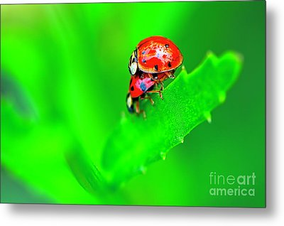 Metal Print featuring the photograph Love Bugs by Sharon Talson