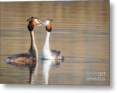 Love Couple Metal Print by Jivko Nakev