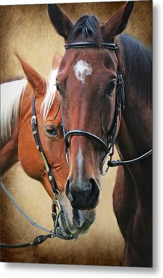 Love Horses Metal Print by Lorella  Schoales