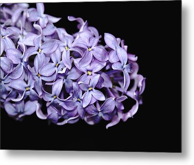 Love In Lilac Metal Print by Debbie Oppermann