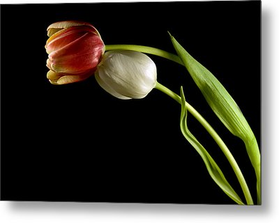 Love In Spring Metal Print by Elsa Marie Santoro