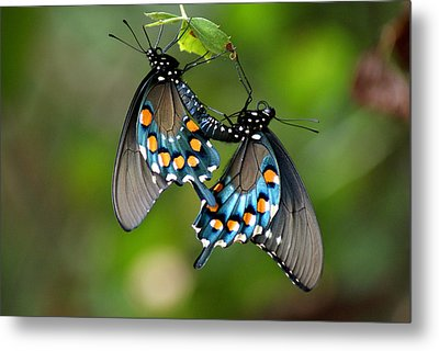 Love Is In The Air Metal Print by Rick Friedle