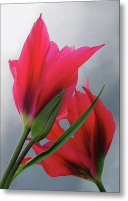 Love Metal Print by Rona Black