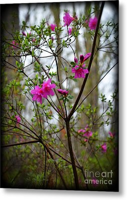 Lovely Bright Pink Flowers Metal Print