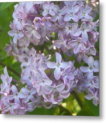 Lovely Lilacs Metal Print by Anna Villarreal Garbis