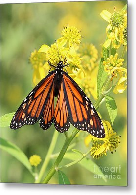 Lovely Monarch Metal Print
