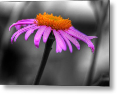 Metal Print featuring the photograph Lovely Purple And Orange Coneflower Echinacea by Shelley Neff