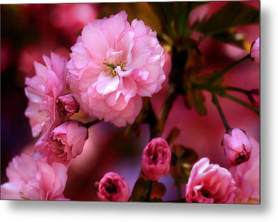 Metal Print featuring the photograph Lovely Spring Pink Cherry Blossoms by Shelley Neff
