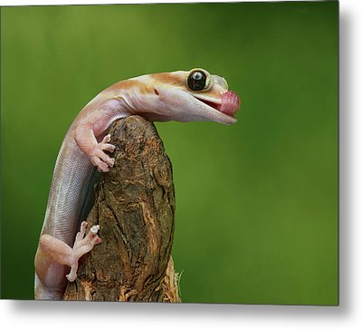Metal Print featuring the photograph Lovely Water - Velvet Gecko by Nikolyn McDonald