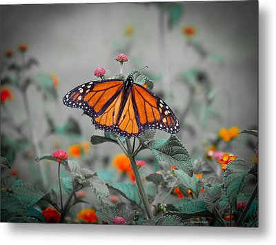 Loving The Lantana  Metal Print