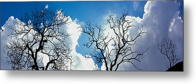 Low Angle View Of Trees Against Cloudy Metal Print by Panoramic Images