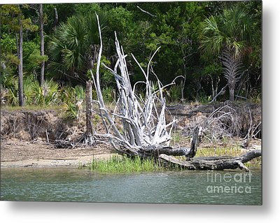 Metal Print featuring the photograph Low Country Driftwood by Carol  Bradley