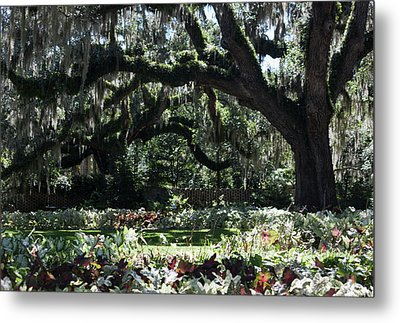 Metal Print featuring the photograph Low Country Series I by Suzanne Gaff