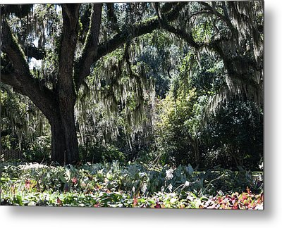 Metal Print featuring the photograph Low Country Series II by Suzanne Gaff