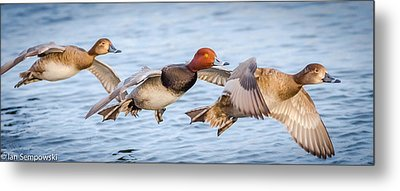 Low Glide Home Metal Print