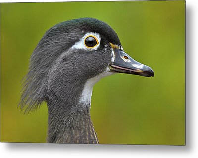 Metal Print featuring the photograph Low Key by Tony Beck