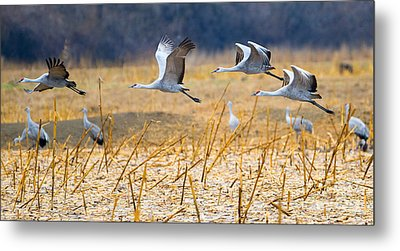 Low Level Flyby Metal Print