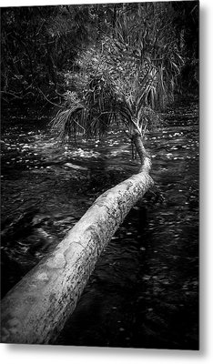 Low Palm Metal Print by Marvin Spates