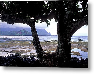 Low Tide And The Tree Metal Print by Kathy Yates