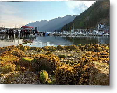 Low Tide At Horseshoe Bay Canada Metal Print by David Gn