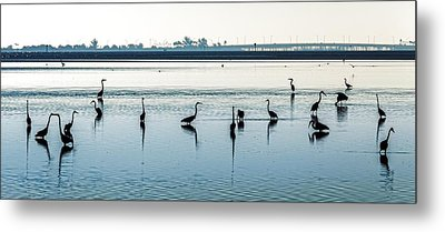 Metal Print featuring the photograph Low Tide Gathering by Steven Sparks