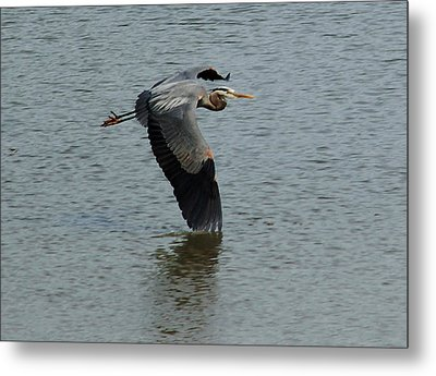 Metal Print featuring the photograph Low Wing by Kathleen Stephens