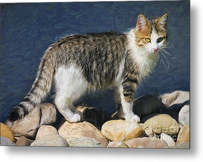 Lucky Is His Name Metal Print