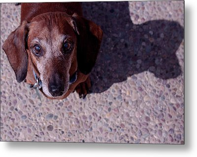 Metal Print featuring the photograph Lucy by Lora Lee Chapman