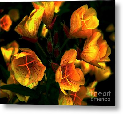 Metal Print featuring the photograph Luminous by Elfriede Fulda