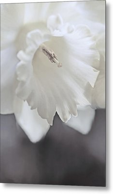Metal Print featuring the photograph Luminous Ivory Daffodil Flower by Jennie Marie Schell
