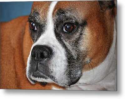 Luna The Boxer 01 Metal Print