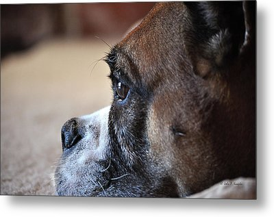Luna The Boxer 02 Metal Print