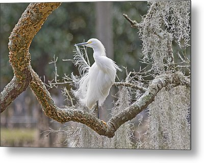 Lunch Buddy Metal Print by Donnie Smith