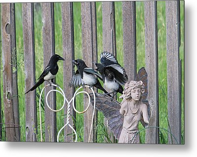Lunch In The Garden Metal Print by Alana Thrower