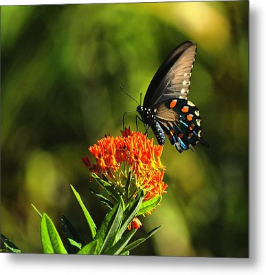 Lunch Metal Print by Rick Friedle