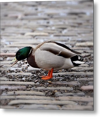 Metal Print featuring the photograph Lunch Time by Jeremy Lavender Photography