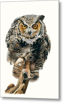 Lunchtime - Great Horned Owl Metal Print