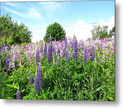 Lupins And Flocks Metal Print by Melissa Parks