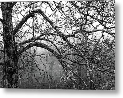 Metal Print featuring the photograph Lure Of Mystery by Karen Wiles