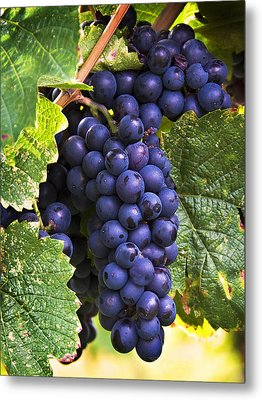 Luscious Grape Cluster Metal Print by Marion McCristall