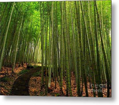 Lush Bamboo Forest Metal Print by Yali Shi