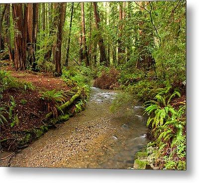 Lush Redwood Forest Metal Print by Matt Tilghman