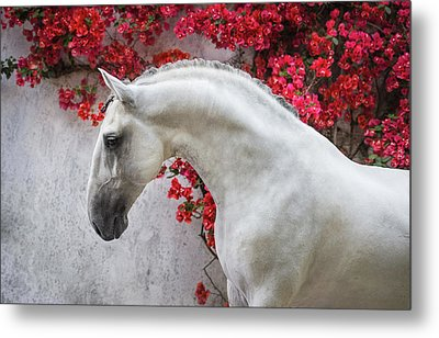 Lusitano Portrait In Red Flowers Metal Print