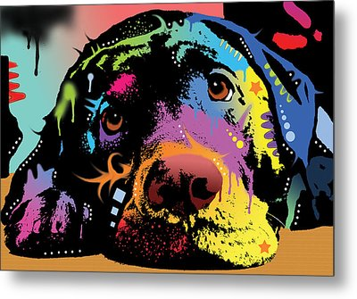 Lying Lab Metal Print by Dean Russo