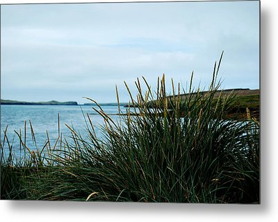 Metal Print featuring the photograph Lyme Grass by Marilynne Bull