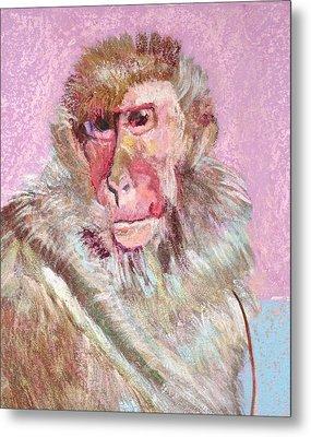 Macaque Metal Print