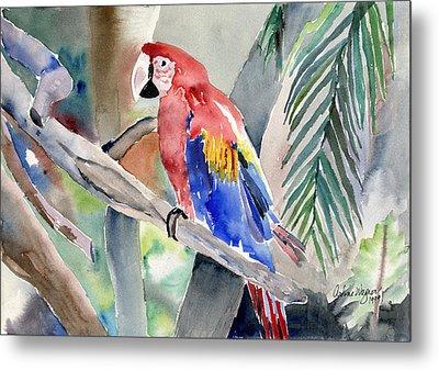 Macaw Metal Print by Arline Wagner